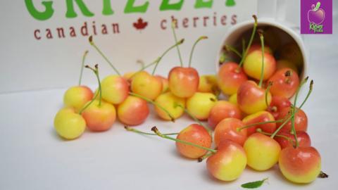 Cherry vàng Canada tại Klever Fruits: Mua càng nhiều, giá càng tốt!