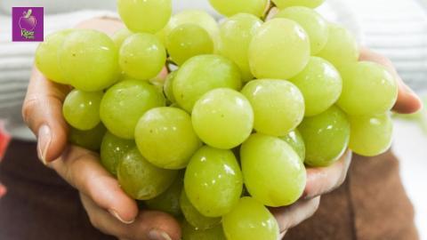 Klever Fruits- Giá sốc nho xanh